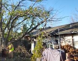Photo #14: Ramon's Professional Tree Service