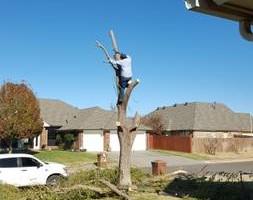 Photo #15: Ramon's Professional Tree Service