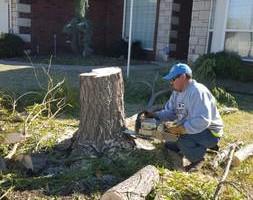 Photo #16: Ramon's Professional Tree Service