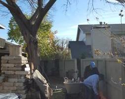 Photo #17: Ramon's Professional Tree Service