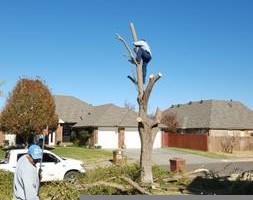 Photo #18: Ramon's Professional Tree Service