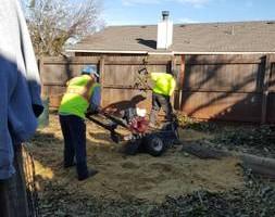 Photo #20: Ramon's Professional Tree Service