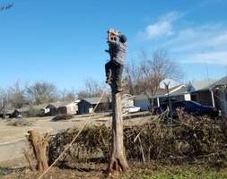 Photo #21: Ramon's Professional Tree Service