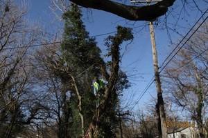 Photo #23: Ramon's Professional Tree Service