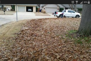 Photo #2: Leaf Mulching or Raking