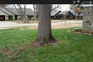 Photo #1: Leaf Mulching or Raking