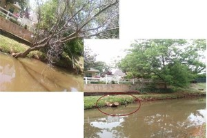 Photo #1: TREE TRIMMING/ REMOVAL AND DEBRIS REMOVAL