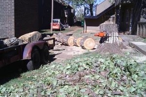 Photo #1: Affordable Aaron's tree care