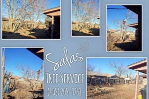Photo #8: SALAS TREE SERVICE LLC. LICENSED/INSURED!