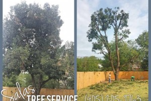 Photo #5: SALAS TREE SERVICE LLC. LICENSED/INSURED!