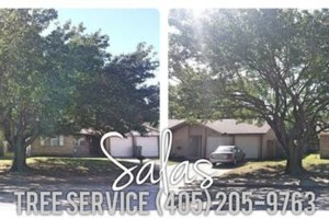 Photo #3: SALAS TREE SERVICE LLC. LICENSED/INSURED!
