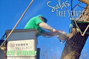 Photo #1: SALAS TREE SERVICE LLC. LICENSED/INSURED!