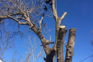Photo #15: Valentines professional tree service