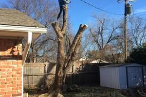 Photo #14: Valentines professional tree service