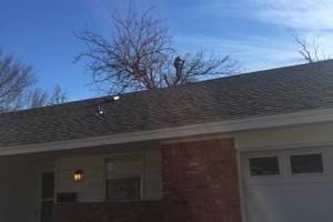 Photo #12: Valentines professional tree service