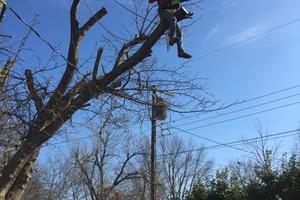Photo #11: Valentines professional tree service