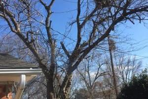 Photo #10: Valentines professional tree service