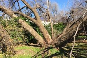 Photo #9: Valentines professional tree service