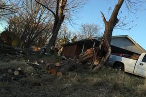 Photo #7: Valentines professional tree service