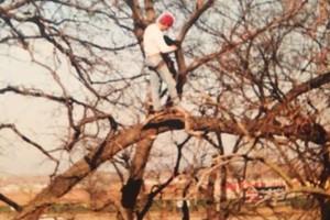 Photo #6: Valentines professional tree service