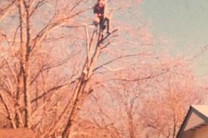 Photo #4: Valentines professional tree service