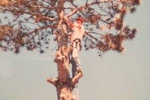 Photo #3: Valentines professional tree service