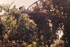 Photo #2: Valentines professional tree service