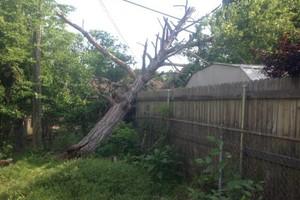 Photo #3: Trees, Trees, Trees! Borgers Tree Service