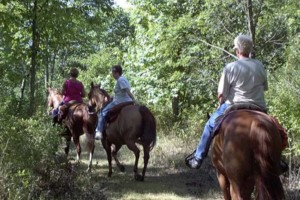 Photo #6: Horse Boarding, NE Oklahoma City Metro- $250. Full care!