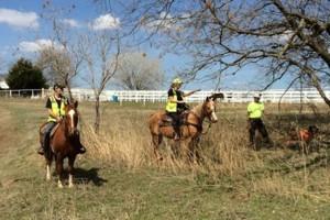 Photo #8: Horse Boarding, NE Oklahoma City Metro- $250. Full care!