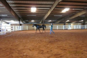 Photo #11: Horse Boarding, NE Oklahoma City Metro- $250. Full care!