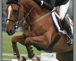 Photo #13: Horse Boarding, NE Oklahoma City Metro- $250. Full care!
