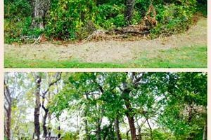 Photo #5: 76 Land Services, LLC. Land Clearing, Tree Removal, Mulching/Dirt Work