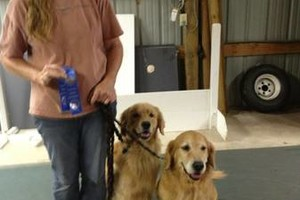 Photo #6: Heavenly Dog Daz. Pet Sitting services/grooming /training!