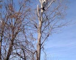 Photo #1: Rods tree service by Rodney