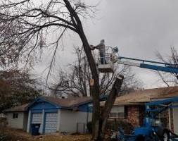 Photo #3: Rods tree service by Rodney