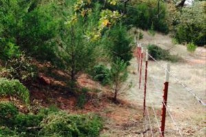 Photo #13: Farm Fence Work