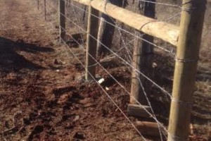Photo #5: Farm Fence Work