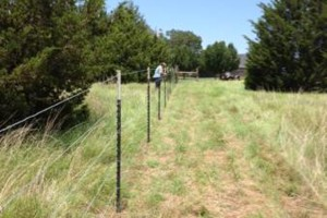 Photo #2: Farm Fence Work