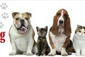 Photo #1: Do you need Cheap Loving Pet Sitter? LOOK HERE!