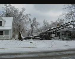 Photo #1: Tree services - trimming, ice storm, clean ups...