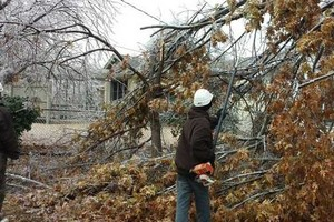 Photo #1: TREE WORK. ICE STORM CLEAN UP