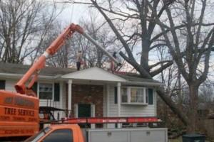 Photo #4: TREE SERVICE by Scott