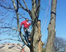 Photo #4: WINTER DISCOUNTS ON ALL TREE WORK! Branch Walker Tree Service