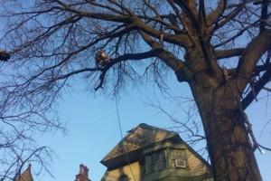 Photo #3: WINTER DISCOUNTS ON ALL TREE WORK! Branch Walker Tree Service
