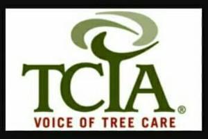 Photo #1: WINTER DISCOUNTS ON ALL TREE WORK! Branch Walker Tree Service