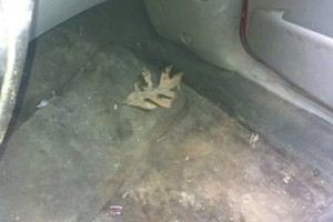 Photo #24: Goode's Custom Garage and Auto Detailing