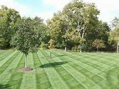 Photo #1: Weekly mow $13 (must be weekly). Lawn Service!