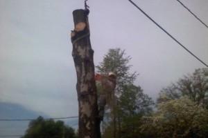 Photo #1: Tree Service. 24 Hr Service. Free Woodchips!