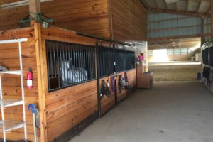 Photo #5: Beautiful equestrian facility. Horse Boarding
